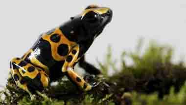 Scientists, Amphibians, Western Ghats, Food chain