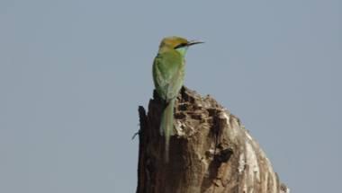Wildlife, Basai, Birds, Najafgarh jheel