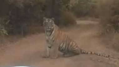 Poaching, Maharashtra, Man-animal conflict, Tiger