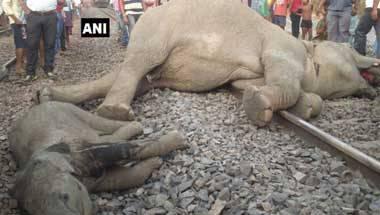 Railways, Train track accidents, Wildlife, Elephant corridor