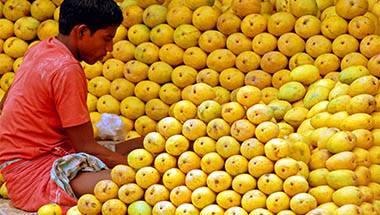 Mango, Food, India, Alphonso