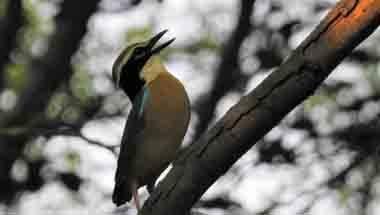 Conservation, Wildlife, Birds, Endemic Bird Day