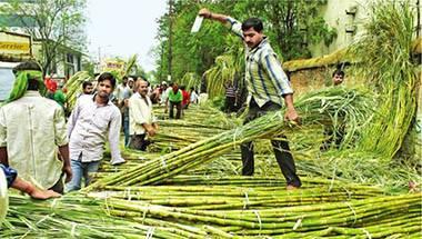Farmer crisis, Sugercane, Narendra Modi, Maharashtra