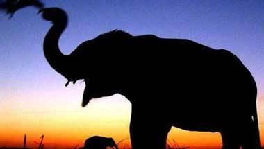 Tamil Nadu, Rauf ali, Elephants, Rainforest