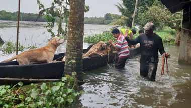 Natural calamity, Kerala animals rescue, Kerala rescue operations, Kerala floods