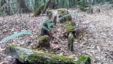 Sacred forest, Magic, Wildlife, Shillong