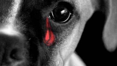 Psychopathic behaviour, Animal Cruelty, Psychological health