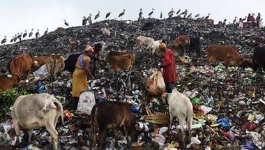 Landfills, Plastic bags, Environmental degradation, Plastic pollution