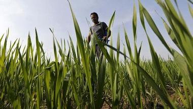 Coronavirus pandemic: The impact of a delayed harvest
