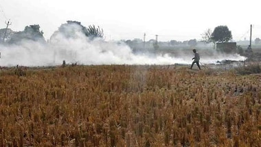 Why Punjab needs a thrust for start-ups to deal with stubble burning