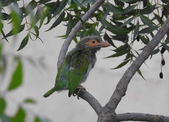 bird-690_082218075454.jpg