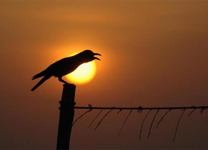 crow_083118080419.jpg