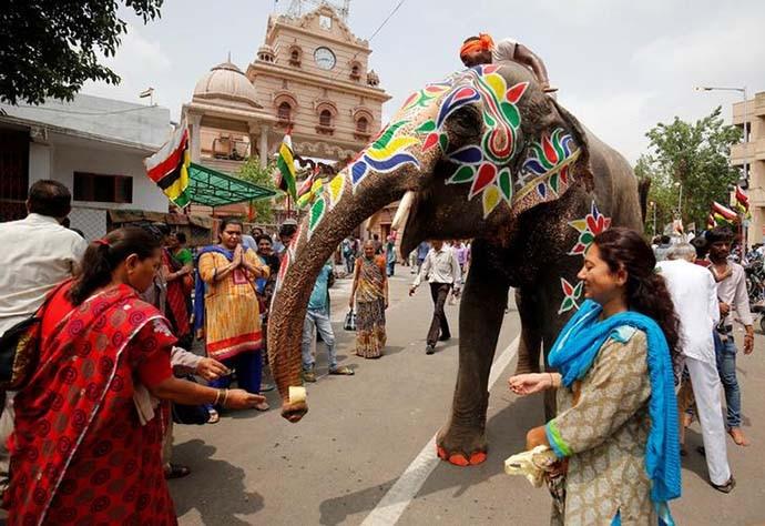 elephant-4_081218035924.jpg