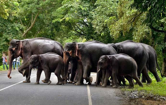 elephant2_081218035834.jpg
