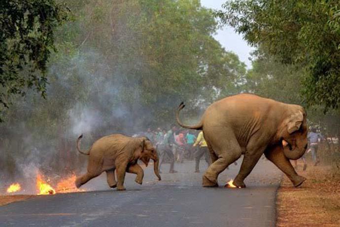 elephant_081218035753.jpg