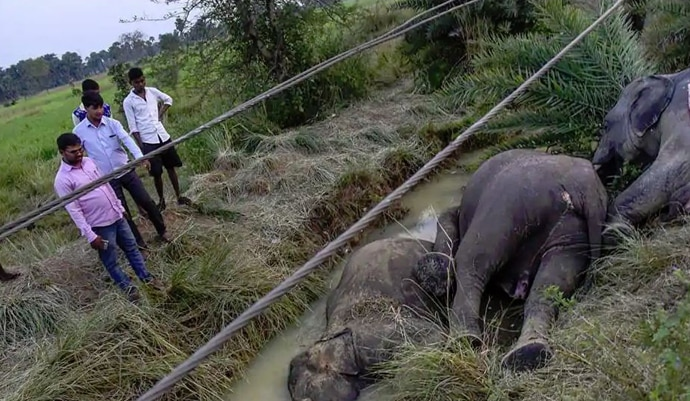 7-elephants-dead-mai_102918041555.jpg