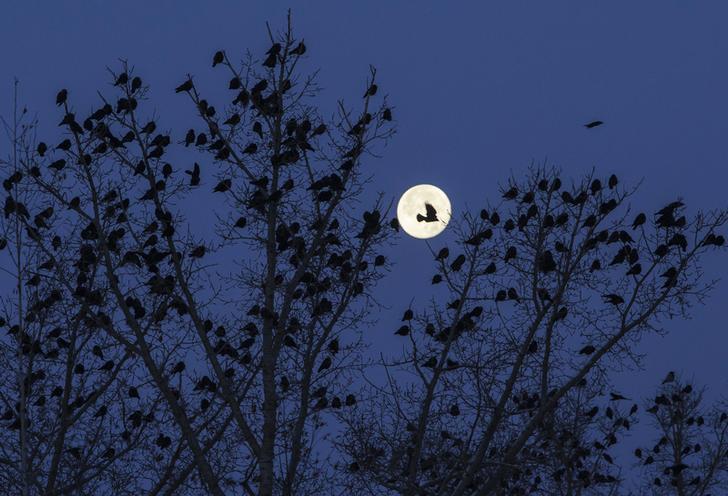 moon-birds_maintext_102518045359.jpg