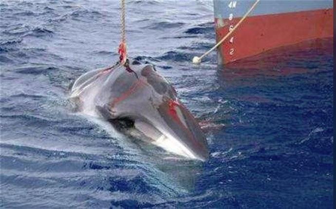 main_dead-whale-reut_122718032108.jpg