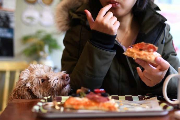 pizza-1-inside_011019021954.jpg