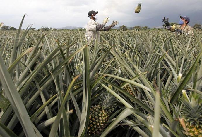 pineapple1-copy_022219084935.jpg