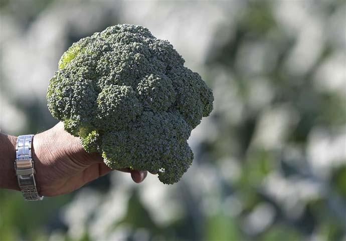main_broccoli_032319034152.jpg