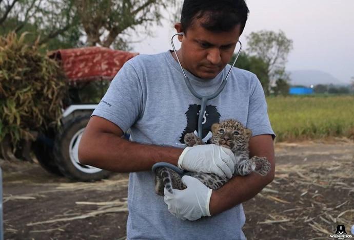 main_vet-leopard-cub_031119053258.jpg