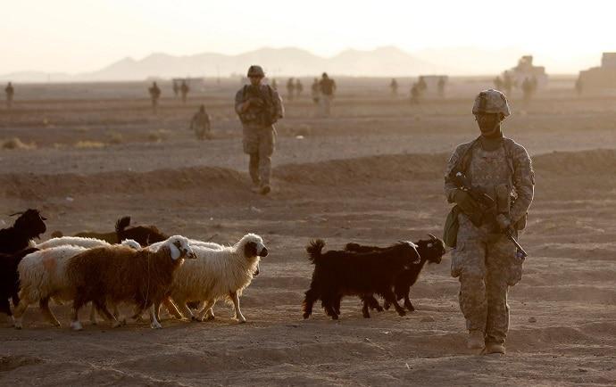 afghan_sheep_rtr-img_051719054410.jpg