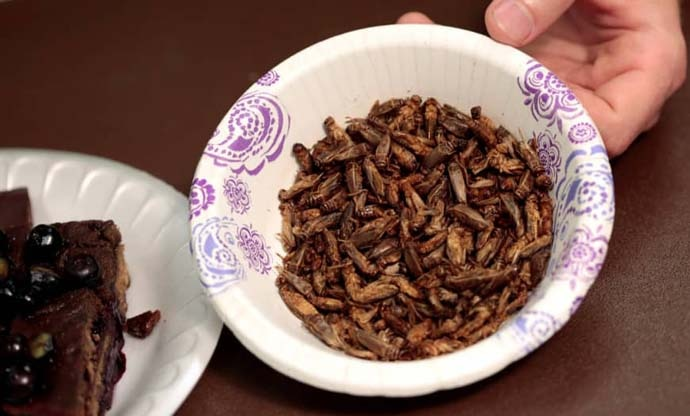 main_insect-food_reu_060619050134.jpg