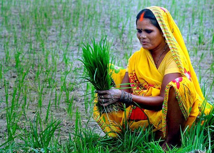 main_farmer-pm-kisan_070419061642.jpg
