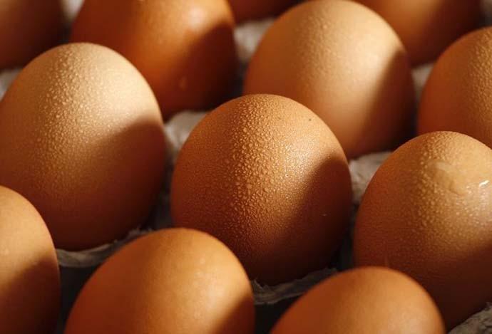 main_eggs2_reuters_041020050855.jpg