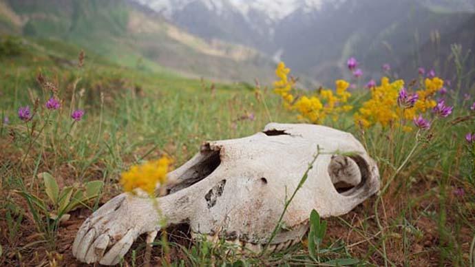 main1_animal-carcass_031521024623.jpg