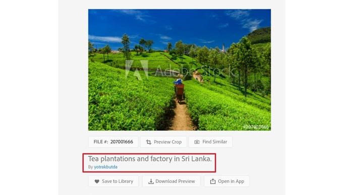 tea-plantation_031921044549.jpg