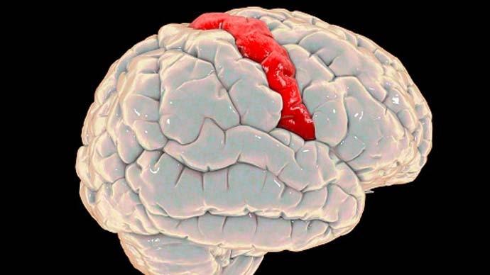 main_brain-gray-matt_061021051327.jpg