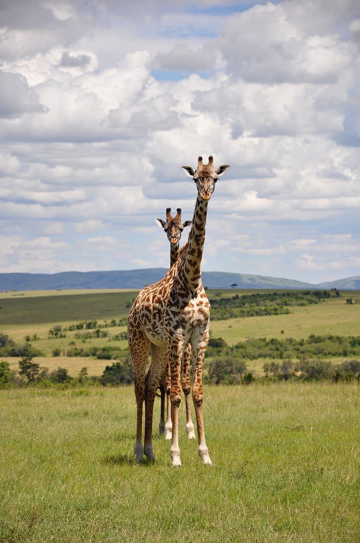 kenya-nairobi-city-maasai-mara-trips-kenya-africa_042020055946.jpg