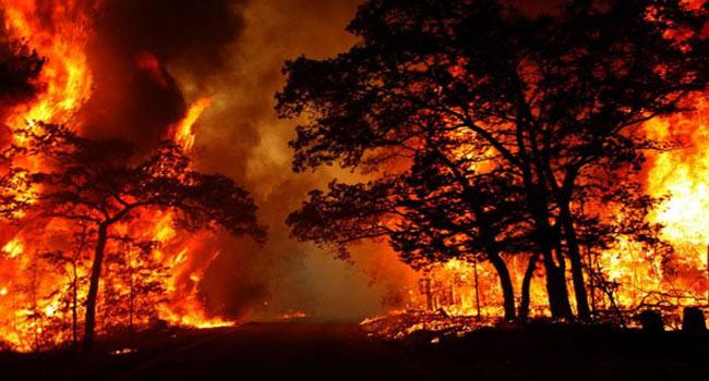 uttarakhand, forest fire