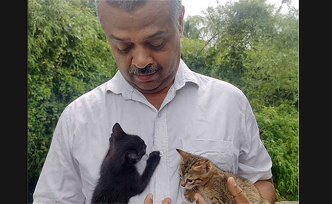 Coronavirus, Kerala, Cats, Kerala High Court