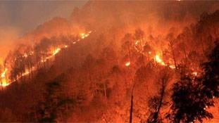उत्तराखंड के जंगलों में आग लगी या लगाई गई?