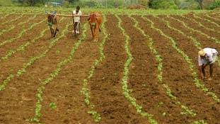 गुजरात में कर्ज से डूबे किसानों की आत्महत्या का है भयानक आंकड़ा