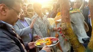 2019 लोकसभा चुनाव से पहले भारत को मिल गया एक और गौ-प्रेमी
