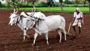 6000 रु. की किसान 'सम्मान निधि' आखिर किस काम आएगी?