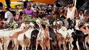 ओ PETA वाले मसीहा, बकरीद पर बकरियों के लिए भी सोचो ज़रा!