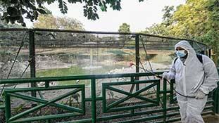 Bird Flu की आड़ में पक्षियों की सामूहिक हत्या 'जलियांवाला बाग़ कांड' से कम नहीं!