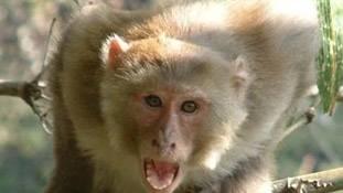 'बदला' लेने वाले इस बंदर ने 'इच्छाधारी नागिन' को पीछे छोड़ा!