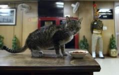 Katrina, a stray cat at Delhi Police Headquarter
