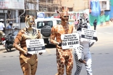 Bengaluru  PETA activists stage a demonstration to urge people to go vegan  ahead of International Day of Forests in Bengaluru  on March 19  2019 International Day of Forests is celebrated on 21st March  Photo  IANS
