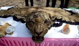 Animal skin at Delhi Zoo