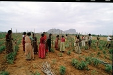 FEMALES WORKING IN THE AGRICULTURE FIELDS