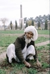 An old Farmer Working in the Agriculture Field in Afghanistan