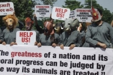 New Delhi  PETA  People for the Ethical Treatment of Animals  activists stage a demonstration to press for strengthening animal laws  quoting a famous saying by Mahatma Gandhi on the ethical treatment of animals  on the eve of Gandhi Jayanti  in New