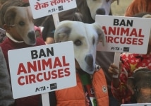 New Delhi  People for the Ethical Treatment of Animals  PETA  activists participate in an awareness campaign urging people to stop the use of animals in circuses  in New Delhi on Dec 15  2018  Photo  IANS
